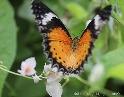 butterflyfarm12