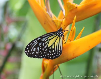 butterflyfarm13