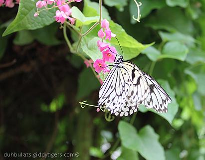 butterflyfarm3