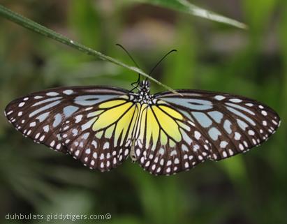 butterflyfarm4