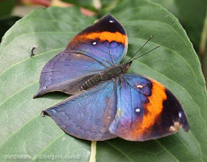 butterflyfarm5