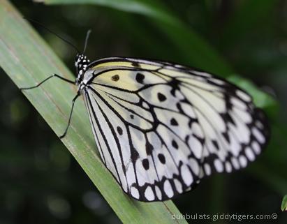 butterflyfarm7