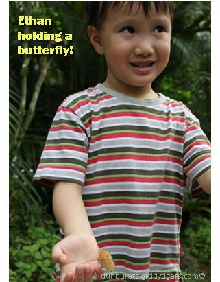 butterflyfarm9