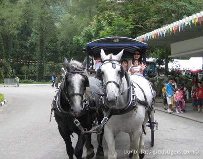 horseshow3