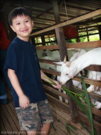 goatfarm5