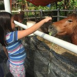 Close Encounter with Animals in the Farm